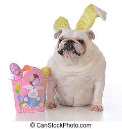 dog dressed up for easter