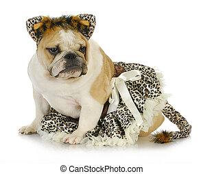 dog dressed up like a cat