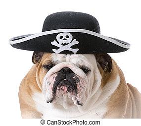 dog dressed up like a pirate