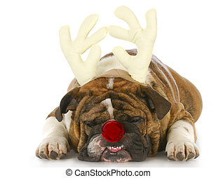 dog dressed up like rudolph