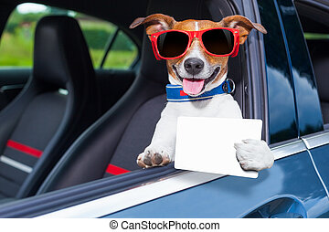 dog drivers license - dog leaning out the car window showing...