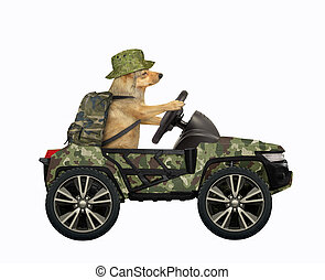 Dog drives military suv