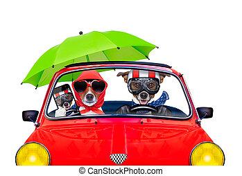 dog driving a car