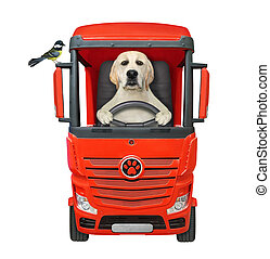 Dog driving red truck 2