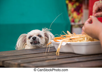Dog eat a prawn fried shrimp salt feed pet owner