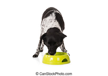Dog Eating Food From Bowl