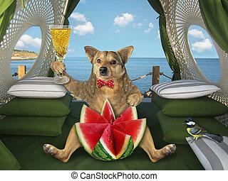 Dog eats watermelon in restaurant by sea