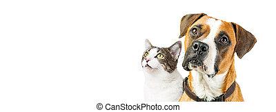 dog, en, kat, samen, op wit, horizontaal, spandoek