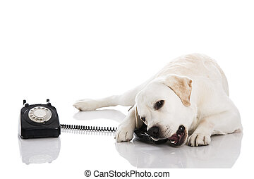 dog, en, telefoon