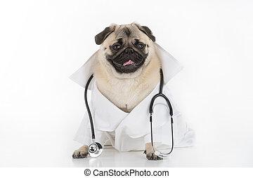 dog., engraçado, sentando, agasalho, doutor, cão,...