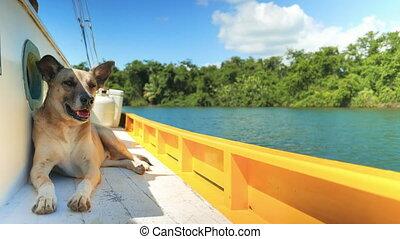 Dog Enjoying a Boat Ride - Dog sitting in the shade on a...