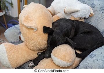 Dog enjoys cuddly toys