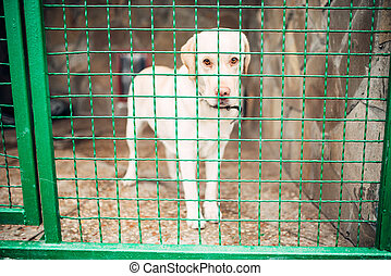 Dog face behind bars, veterinary clinic, no people - Cute...