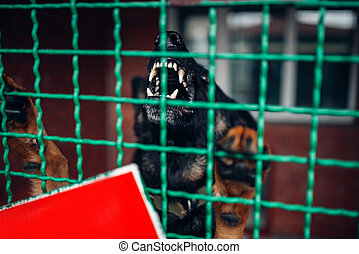 Dog face behind bars, veterinary clinic, no people - Dog...