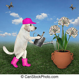 Dog farmer watering money flower 2