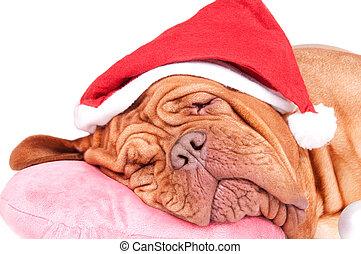 Dog fell asleep before Christmas