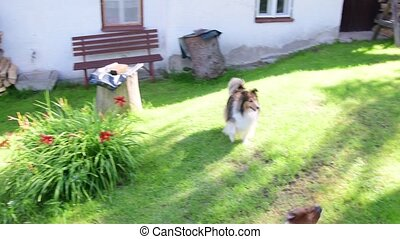 Dog fetches the ball. Dogs play in the backyard.