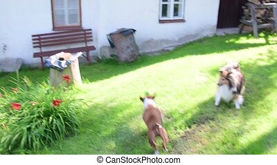 Dog fetches the ball. Dogs play in the backyard