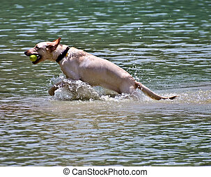 Dog Fetching in the Water