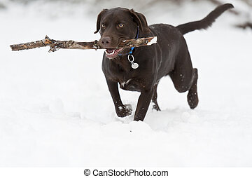 Dog fetching stick in winter scene