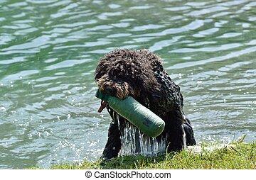 Dog fetching toy