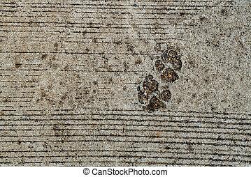 Dog foot print on concrete floor