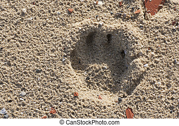 Dog footprint in sand