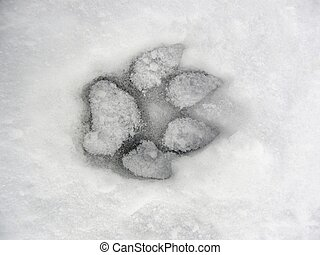 Dog footprint in the snow