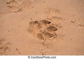 dog footprint on beach