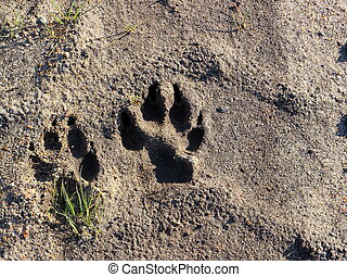 Dog footprint on ground