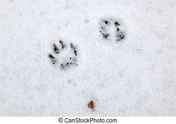 Dog footprint on snow
