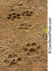 Dog footprint on soft ground