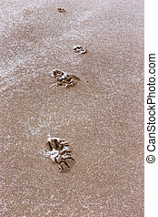 Dog footprints after the frost - Dog footprints in the sand...