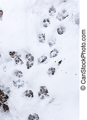 Dog footprints in the snow on the nature .