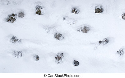 Dog footprints in the snow .