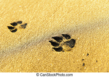 Dog footprints on beach