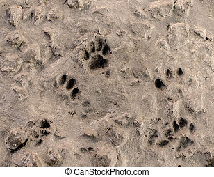 Dog footprints on cement floor background.