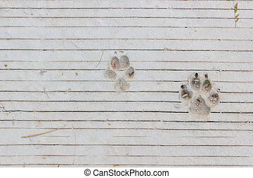 Dog footprints on lines concrete floor