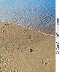 Dog footprints on the beach sand