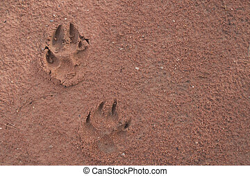Dog footprints on the red soil