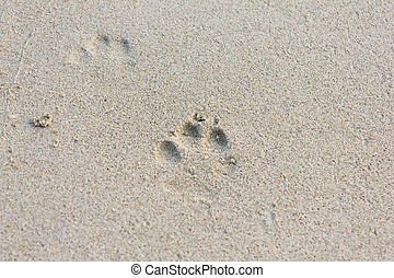 Dog Footprints on the Sand - The Dog Footprints on the Sand...