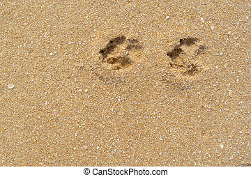 Dog footprints on the sandy beach.