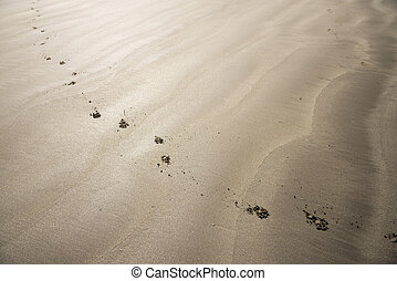 Dog footprints on sandy beach which continuing diagonally