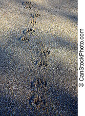 Dog Footprints - A small set of dog footprints in sand