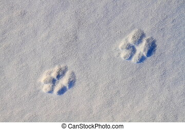 Dog footprints - Animal tracks on snow background
