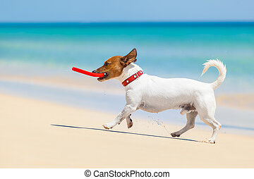 dog frisbee - dog catching a red frisbee and running at the...