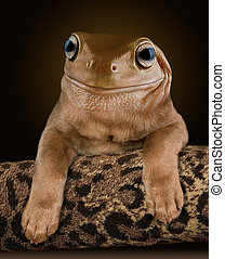 A chocolate lab pup seems to have the head of a Whites tree frog.