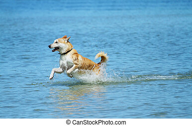 A happy dog splashing at the beach.