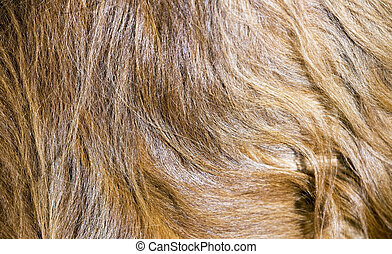 Dog fur banner