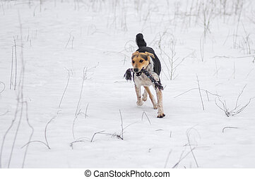 Dog galloping in snow with rope while playing in winter field